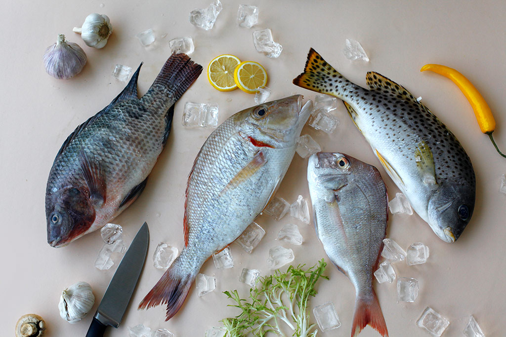 Fish35