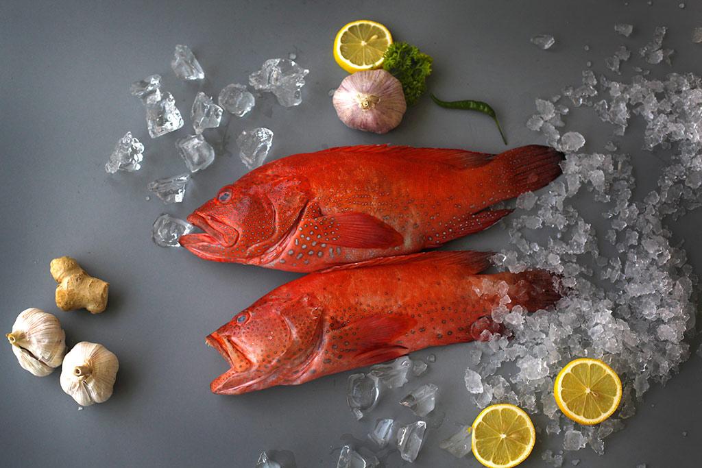 Fish40